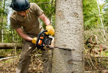 tree-cut-services
