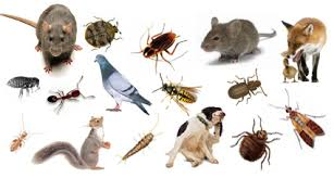 What Are The Things That You Should Expect From Your Pest And Insect Control Service?