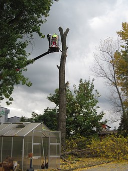 All Over Chatswood Now Experts Shall Remove Your Trees